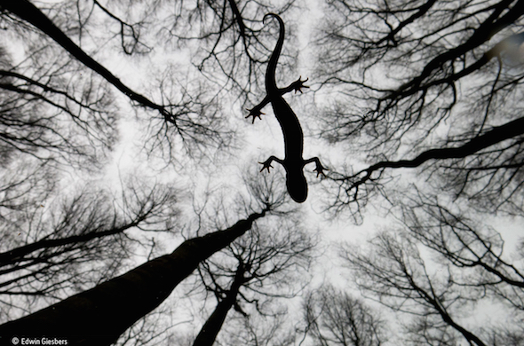 Image of trees for the Wildlife Photographer of The Year