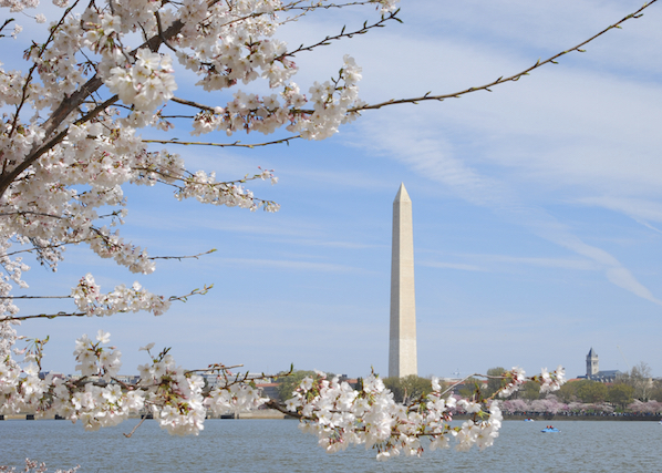 The blossoms in Washington DC make a great reason for a city visit.