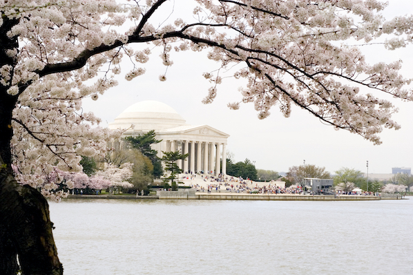 A city break in The Dupont Circle hotel in Washington DC means blossoms in the springtime.