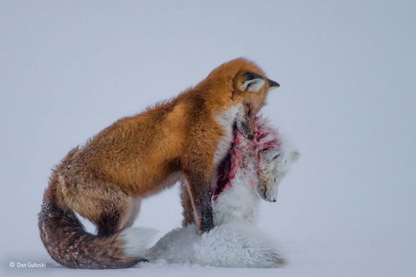 Image from the Wildlife Photographer Exhibition of The Year at The Natural History Museum