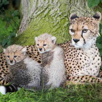 What to see at Fota Wildlife Park Banner Image