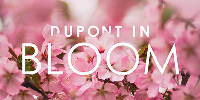 Dupont in Bloom