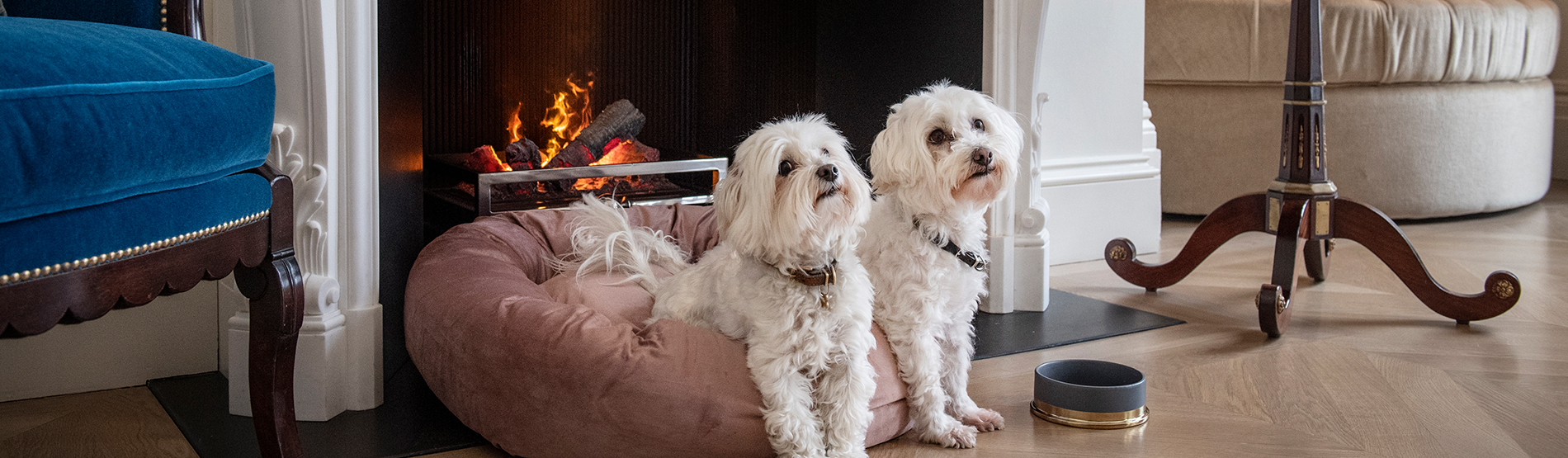 Dogs lying by the fire at the Marylebone